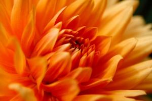 closeup bloem 2.jpg