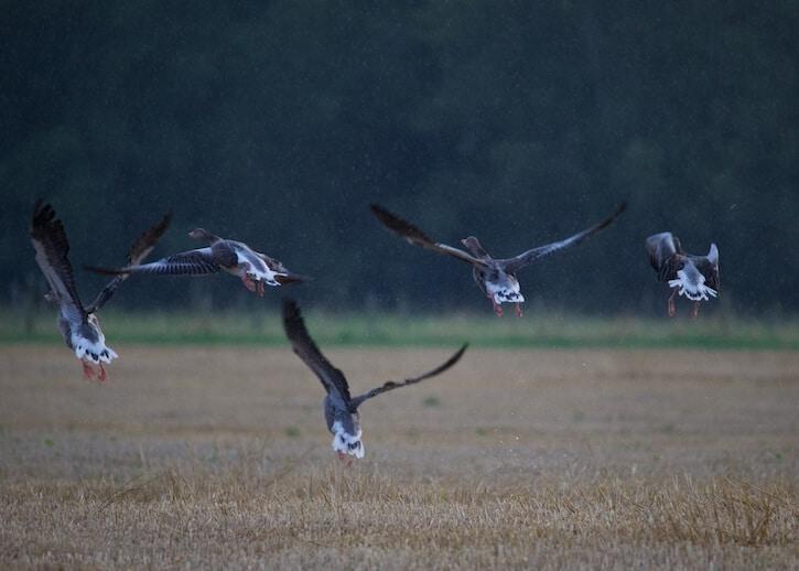 Tamron_150-600mm_test_shot_birds_2