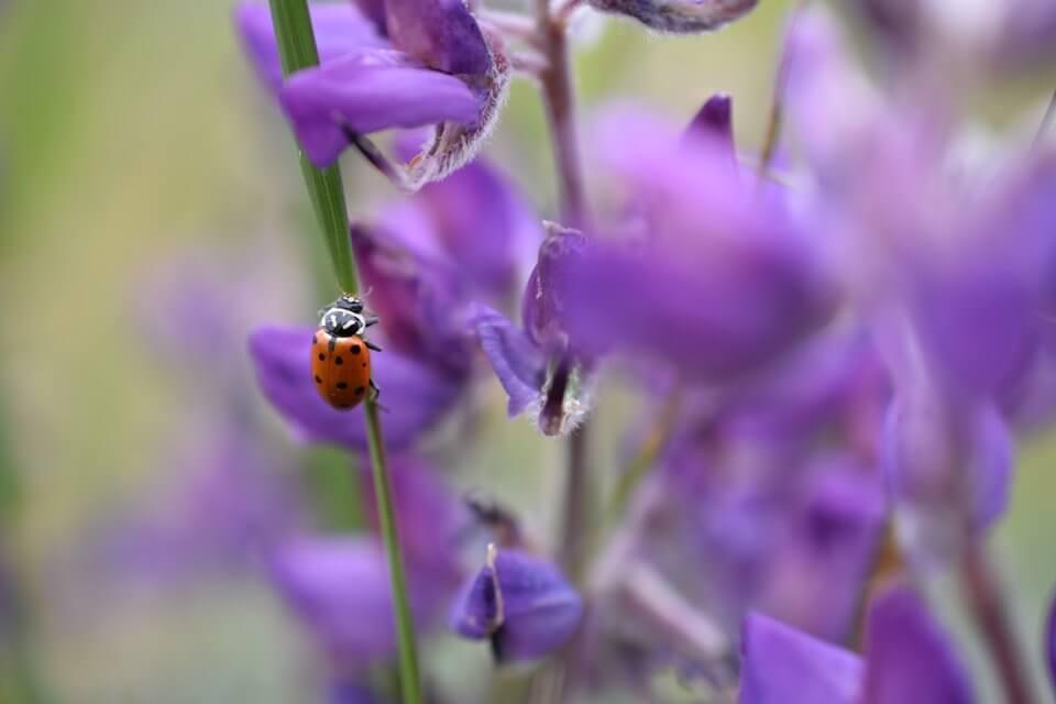 nikon_dslr_d3400_ladybug_A5--sample-960-large