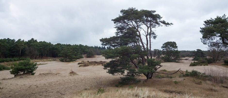 soesterduinen panorama foto