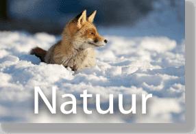 natuur (1 of 1)
