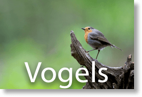 vogels (1 of 1)